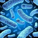 Types of bacteria