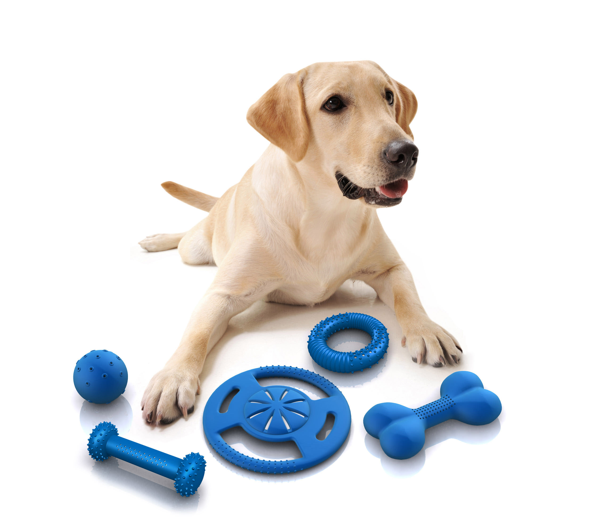 Why Do Some Dogs Not Like Toys