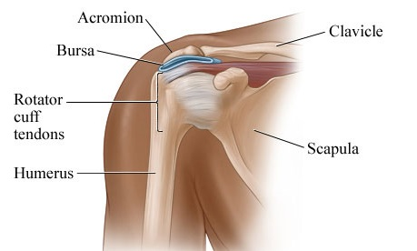 Pain in shoulder blades