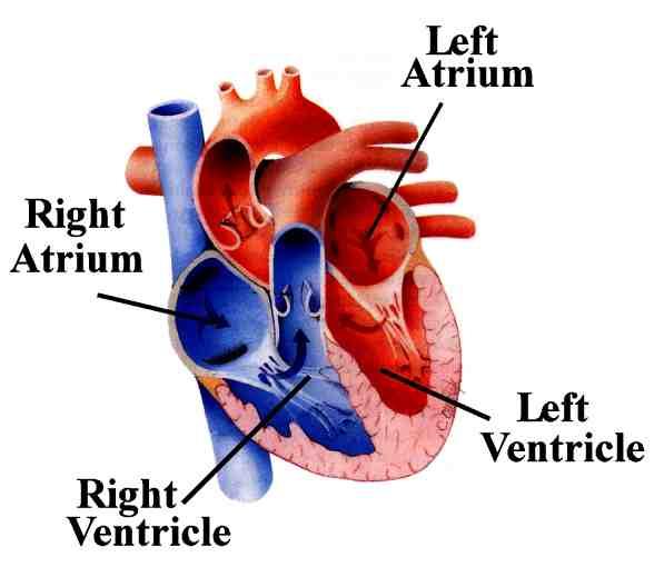 What Is Congestive Heart Failure Chf