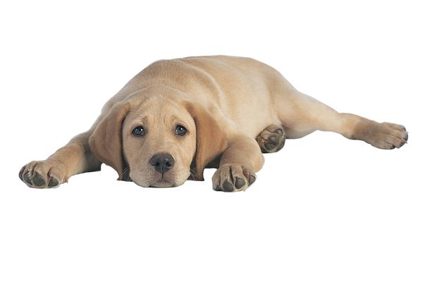 Dog Lethargy and Other Signs to Watch Out For
