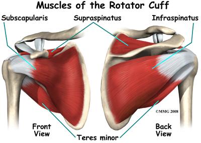 Rotator Cuff Injury Symptom Diagnosis And Treatment Md
