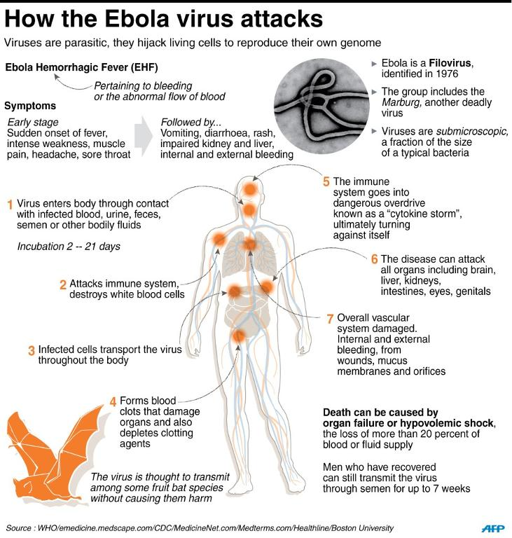 What Does Ebola Do To The Body Md Health